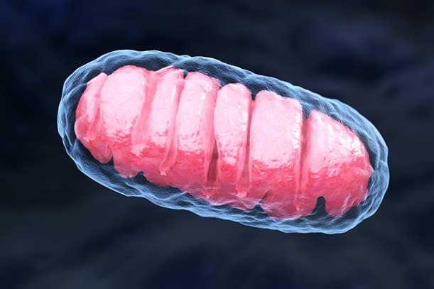 CTS regenerative Mitochondrien-Therapie info CTS regenerative Mitochondrien-Therapie